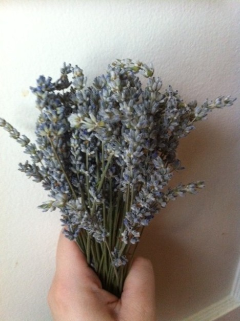 Lavender Essential Oil, a Prepper's best friend